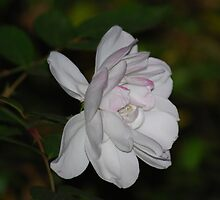 White- purity, Pink- love by laureenr
