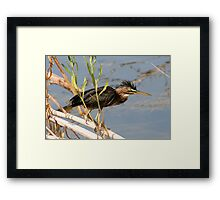 Heron on the Move Framed Print