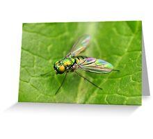 Long-Legged Fly  Greeting Card