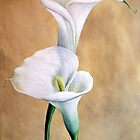 Calla Lilies by Rob Mitchell