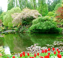 A Special Place for Meditation... by Carol Clifford