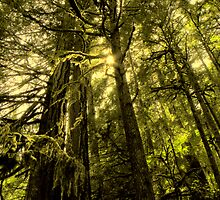 Hoh Rain Forest ~ Olympic Peninsula, WA ~ by lanebrain photography