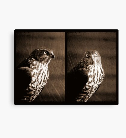 Portrait of a Predator Canvas Print