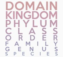 Domain, Kingdom, Phylum, Class, Family, Genus, Species by jezkemp