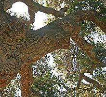 Big old Oak by Trish Peach