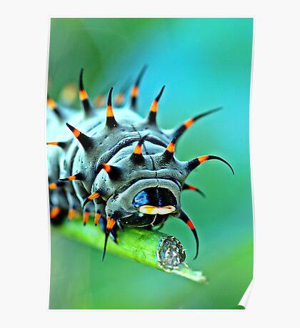 Close Up - Cairns birdwing caterpillar Poster