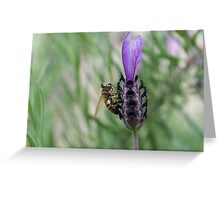 Bee on Lavendar #1 Greeting Card