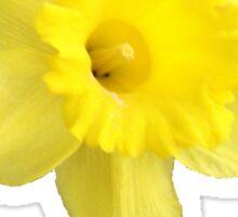 Yellow Daffodil Sticker