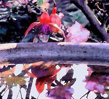 'Birdbath' by DLUhlinger
