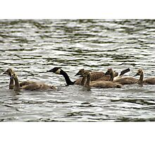 Flock on the Water Photographic Print