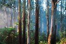 Sherbrooke Forest by Ern Mainka