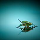 Quit buggin' me! by Kory Trapane