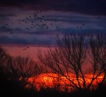 Impressions After Sunset by Owed To Nature