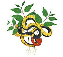 ningneck snake Photographic Print