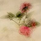 Minature Roses by CarolM
