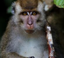 Long-Tailed Macaque Sticker
