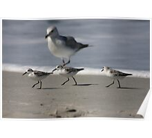 Dancing birds Poster