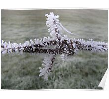 Ice covered barbed wire Poster