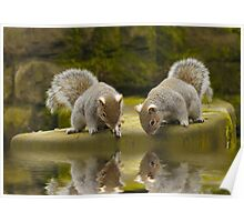 Double reflections Poster