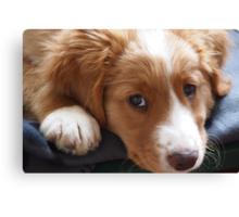 Puppy gazing at photographer Canvas Print