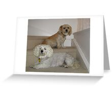 Max and Sophie Greeting Card