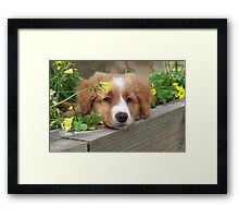 Cute puppy lying in the garden Framed Print