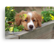 Cute puppy lying in the garden Canvas Print