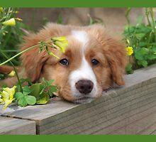 Cute puppy lying in the garden by Julie Haydon