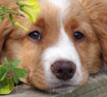 Cute puppy lying in the garden Sticker