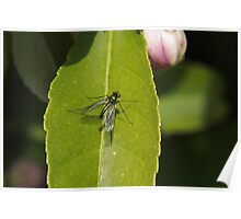 Winged insect on leaf Poster