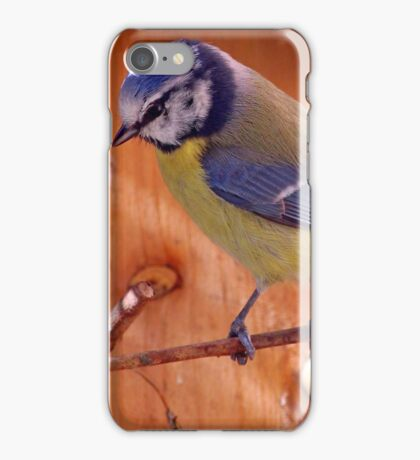 Blue Tit  --- Cyanistes Caeruleus iPhone Case/Skin