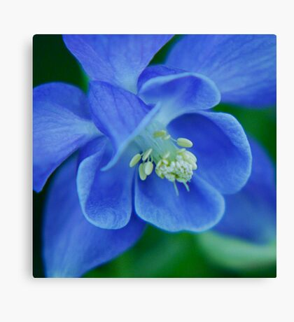 So Blue Canvas Print