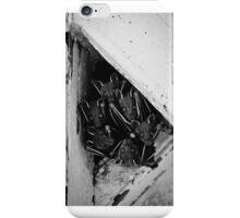 Bats staring in the camera. iPhone Case/Skin
