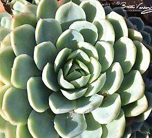 barwon park garden winchelsea by brittavanden
