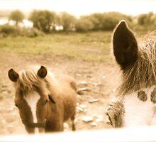 Horses In June by EdelPankhurst