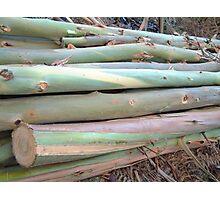Newly sawn Eucelyptus  Poles Photographic Print