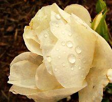 morning dew 2 by Angelafaye