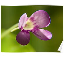 Venus flytrap flower Poster