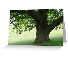Peaceful Boughs Greeting Card