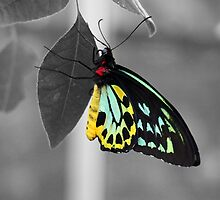 Coloured Butterfly by Bianca Robinson