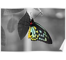 Coloured Butterfly Poster