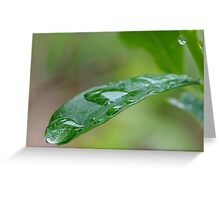 All wet Greeting Card