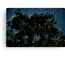 Fireflies Swarming Canvas Print