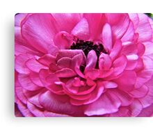 Pink Pedals Unfurling Canvas Print