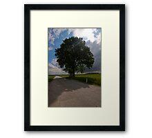 Arbor Vitae Framed Print