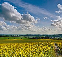 North Downs Way 23-19 by gollum1985