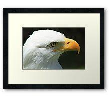 Face of an Eagle Framed Print