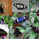 Butterfly Valley by ienemien