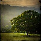 Tree by ffotoCymru