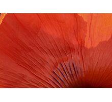 Poppy Petal Photographic Print
